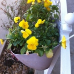 I like the pansies that bloom and thrive in the winter months.