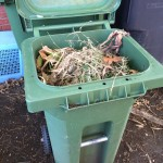 Maybe I can shove some of the old ferns into this bin, which will be emptied Monday when the recycle truck comes by.