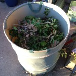 The overflow bin, full of holly trimmings