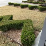 This was on the grounds of the Chickasaw Nation Visitor's Center. Maybe interestingly trimmed hedges is just an Oklahoma-type thing.