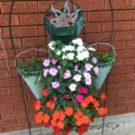 Meanwhile, aren't the impatiens pretty!