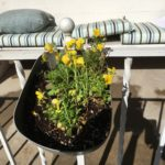 Violas hanging on the front railing. Cool weather plants, they won't last much longer.