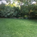 This is the backyard, looking towards the north.